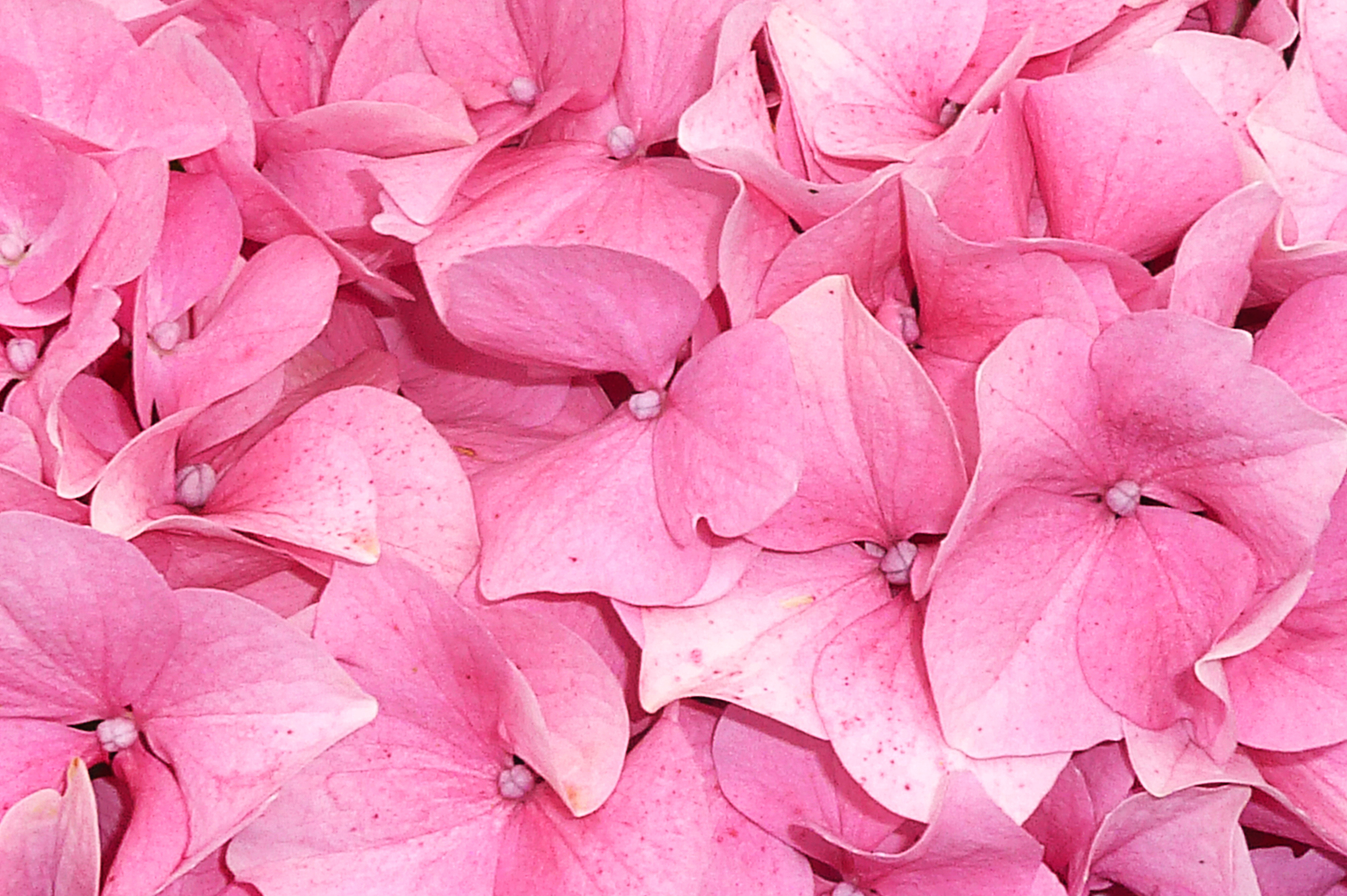 Thirteen Awesome Floral Textures | photoshopworkshop